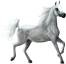 Zwykły koń